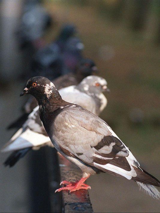 Bird Exclusion Service IPM Specialist