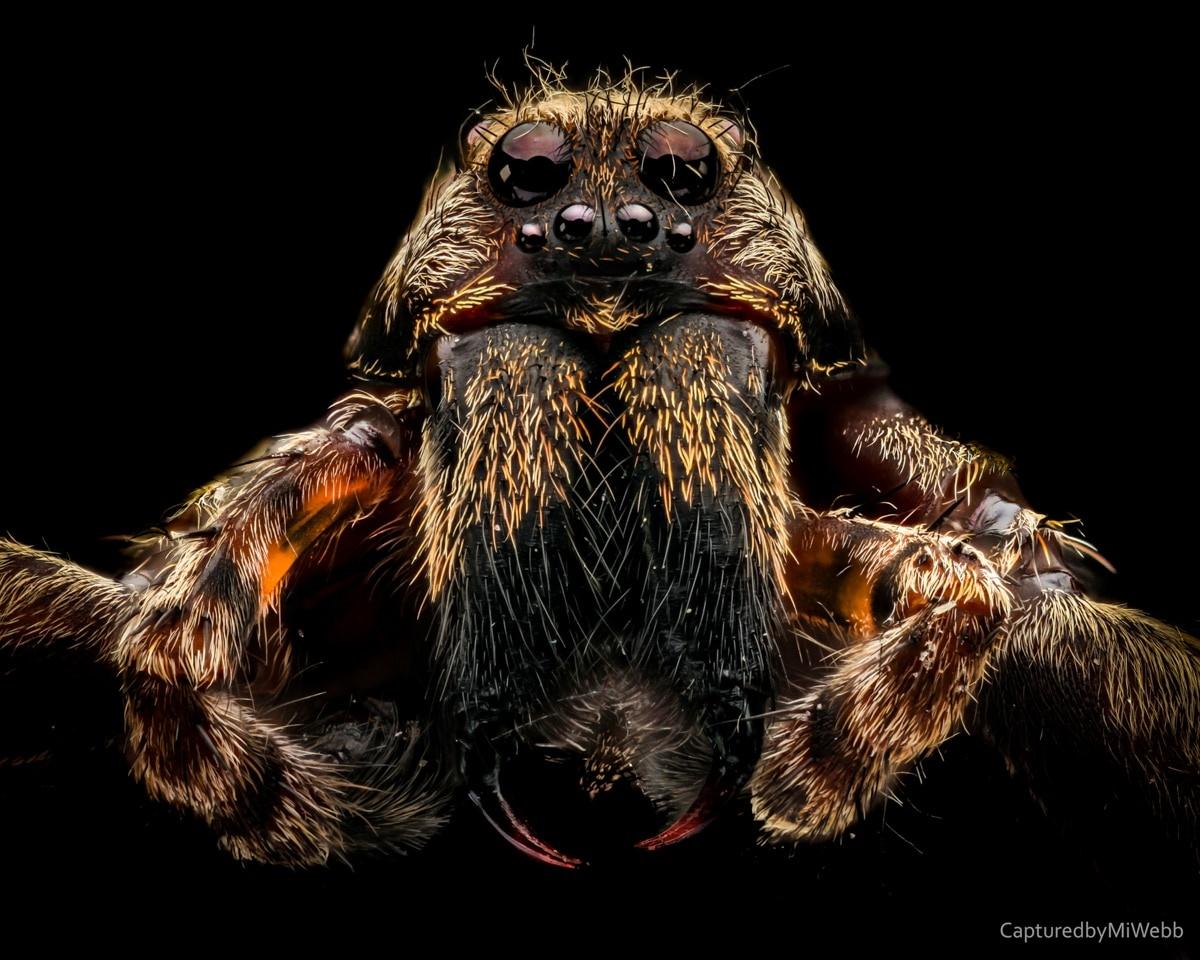 Spider Service IPM Specialist