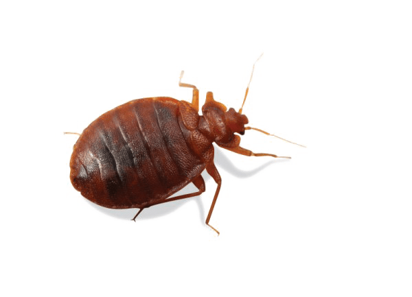 Bed Bug Service IPM Specialist