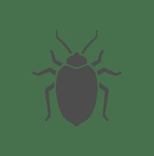 bedbug icon