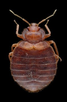 Bed Bugs Service IPM Specialist