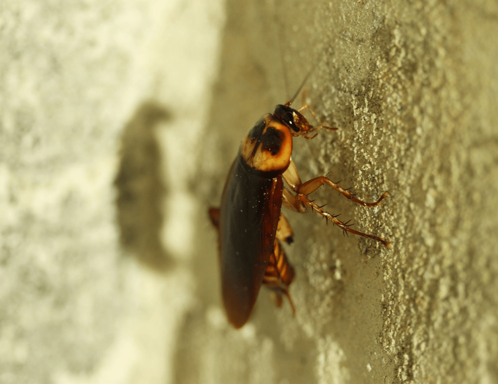 Cockroach Service IPM Specialist