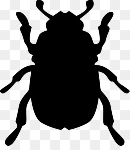 beetle bug icon