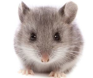 Rodent Exclusion Service IPM Specialist