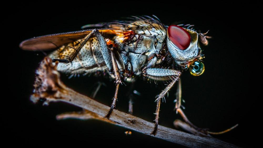 Flies Service IPM Specialist