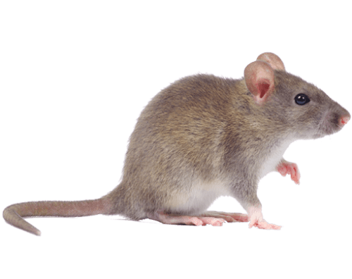Rodent Service IPM Specialist