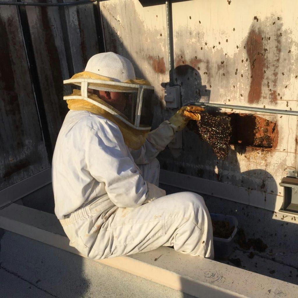 Wildlife bee Service IPM Specialist